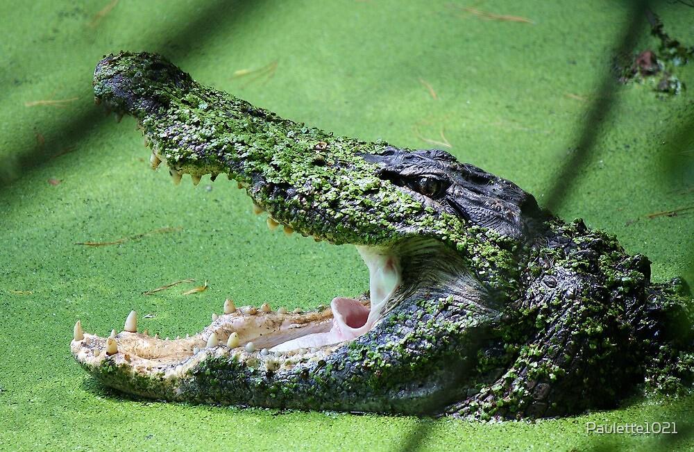 Gator Bite by Paulette1021