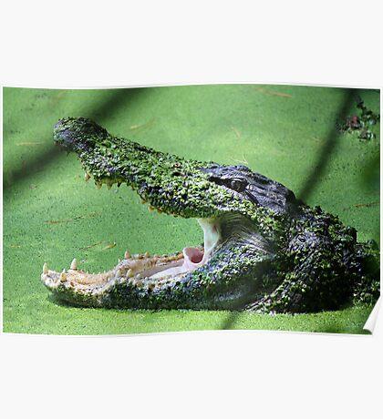 Gator Bite Poster
