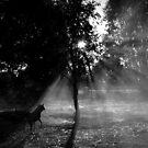 Smoky shadows by Penny Kittel