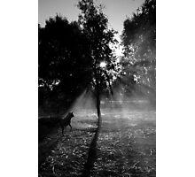 Smoky shadows Photographic Print