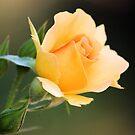 Just Peachy by Carrie Bonham