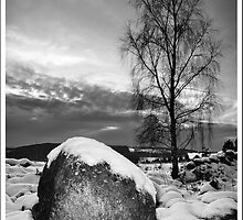 Black Tree and stone in the snow by Suzanne Edge