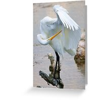 Great White Egret - Searching Greeting Card