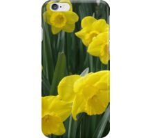 Sunny daffodils iPhone Case/Skin