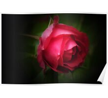 Single red rose Poster