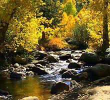 """""""Lazy River"""" by Lynn Bawden"""