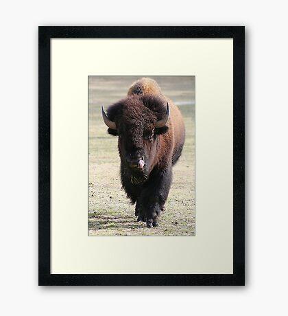 Buffalo Bill Framed Print