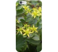 Gorgeous Teeny Tiny Yellow Flowers iPhone Case/Skin