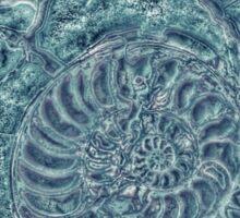 Nautilus of the Oceans Sticker