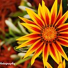Scorching Petals by lisabella