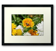 bumble bee on yellow  Framed Print