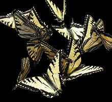 Swallowtail Mobile by lloydsphotos