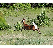 Deer: Defying gravity Photographic Print