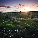 Cotton Grass Sunset, near Knockando by Christopher Thomson