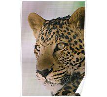 Leopard & majestic Poster
