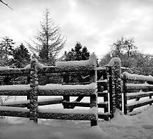 Fence in the snow by Suzanne Edge