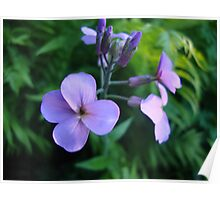 Tiny Purple Flowers  Poster