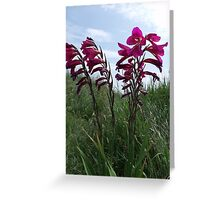 Wild Flowers on Hengistbury Head Greeting Card