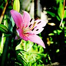 Little Pink Lilly by AngryGoldfish