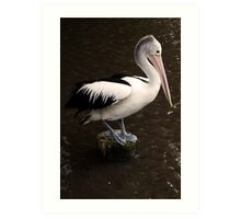 Balancing Act - pelican in Cairns Art Print