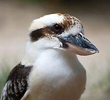 Kookaburra portrait by Jenny Dean