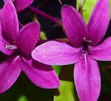 Powerfully purple by ♥⊱ B. Randi Bailey