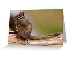 Baby Chipmunk Greeting Card