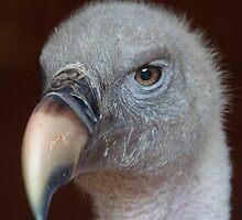 vulture by purpleminx