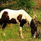 A Paint horse Grazing by Susan Blevins