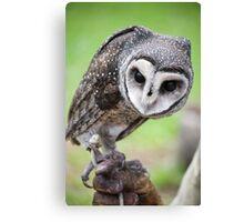 Sooty Owl Canvas Print