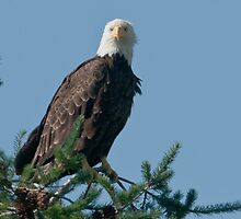 Eagle Eyes by David Friederich