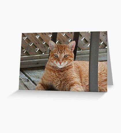 What's a good name for a cat on a very hot summer's day? Greeting Card