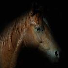 Horses  2011 by julie anne  grattan