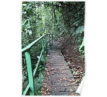 Rain Forest Walkway Poster