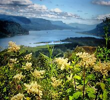 Spring Along the Columbia River by Barbara  Brown