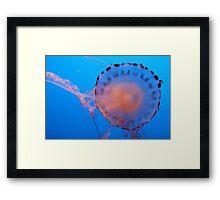 Beautiful Jellyfish Framed Print
