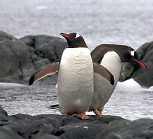 Happy Feet by Marylou Badeaux