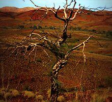 A tree with personality-Outback WA by bushplumbersmrs