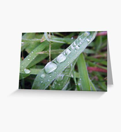 Morning Dew Greeting Card