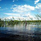 Water Level by Rhonda Blais