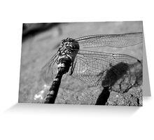 Fly Dragon Greeting Card