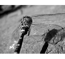 Fly Dragon Photographic Print