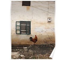 Resting rooster - Yangshuo - China Poster