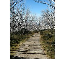 Path to Wallace Hut, Bogong High Plains Photographic Print