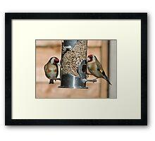 Goldfinch (British) Framed Print