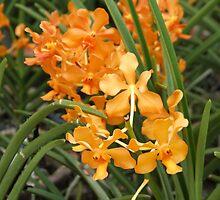 Orange Orchid - Taman Orkid, Kuala Lumpur  by BreeDanielle