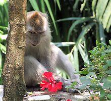 Curious - Lake Gardens, Kuala Lumpur by BreeDanielle