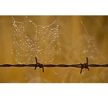 Web on the wire Photographic Print