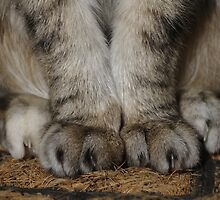 Fluffy Knees by abbycat