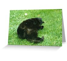 cat yoga I Greeting Card